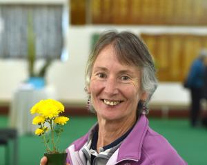 Julie Judd shows off one of her prize-winning chrysanthemums at the Dunedin Horticultural Society...