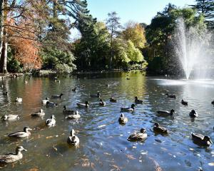 The duck pond in Invercargill's Queens Park has been cleaned for the first time in 30 years....