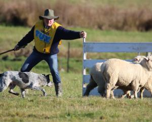 Greenvale Dog Trial Club member Brian Dickison and Cole, seen here penning sheep during the final...