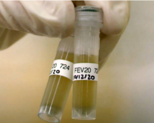 Sampling of city wastewater plants for traces of the virus has been carried out in New Zealand...