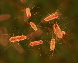 A computer illustration of Escherichia coli (E.coli) bacteria. Image: Getty