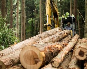 The CCA-treated timber waste is equivalent to about 175,000 10m-high pine trees going to waste...