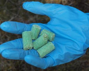1080 cereal bait pellets. Photo: DOC