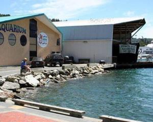 Picton's EcoWorld Aquarium and Wildlife Rehabilitation centre will be closing following failed...