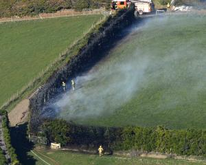 Firefighters extinguish a hedge fire near Upper Junction this morning. Photo: Gerard O'Brien