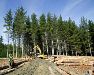 Contractors at work on a Dunedin City Council-owned City Forests plantation near Dunedin. PHOTO:...