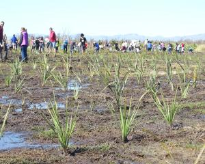 A community planting day at the Travis Wetlands. Photo: Supplied