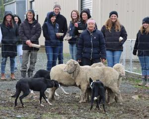Waikaka farmer Pip Wilson demonstrates how to work sheep with her dogs at a Feel Good Field Day...
