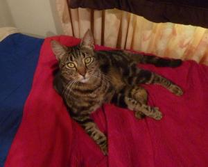 Vinny the cat was allegedly shot dead while sleeping near his home in Taumarunui. Photo: Geoff...