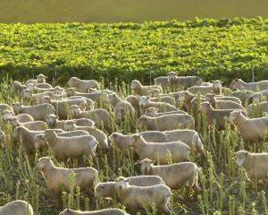 A draft intensive winter grazing farm plan module has been developed by a Southland Advisory...