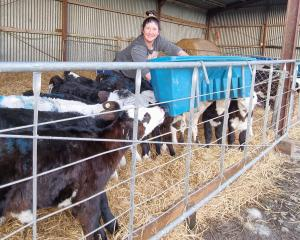 Clinton farmer and calf rearer Laura Allan just had to get on with shifting breaks and feeding...