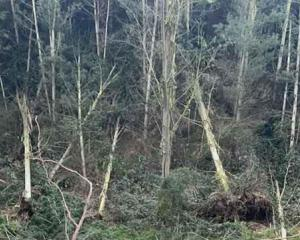 Some of the trees that toppled on Rebecca Miller's farm south of Ashburton. Photo: Supplied /...