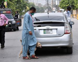 A bomb sniffing dog checks vehicles in Rawalpindi before the ODI between New Zealand and Pakistan...