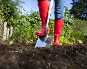 Understanding the basic needs of soil and improving soil fertility is a common theme in the...