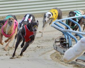 The greyhound racing industry of New South Wales has been granted one last chance to reform....