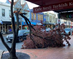 A limb snapped off a tree in George St in central Dunedin. Photo: Stephen Jaquiery