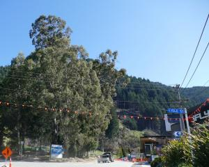 The Queenstown Lakes District Council has delayed  felling five eucalyptus trees in Brecon St —...