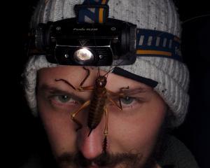 Photographer and environmental educator Sam Purdie gets up close to a West Coast bush weta ...