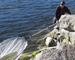 Opening day whitebaiter David Brennan has his first drag from the rocks on the banks of the Grey...
