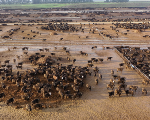 Environmentalist Geoff Reid described the conditions the animals were being kept in as mud...