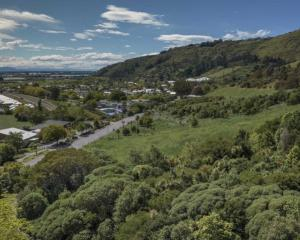 A new two-stage proposal for Birdsey Reserve includes a food forest, regeneration and a dog park....