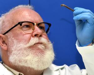 rof Glenn Summerhayes studies a cassowary bone from the late Pleistocene age (more than 10,000...