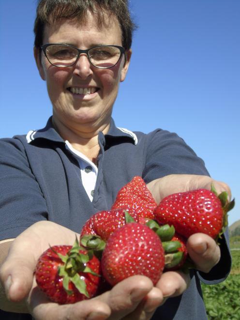 Heather Preedy, owner of Ettrick Gardens, shows off her new season strawberries Photo: Simon Henderson