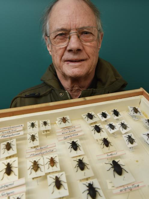 Anthony Harris with a display case of weevils he has collected. Photo: Gregor Richardson