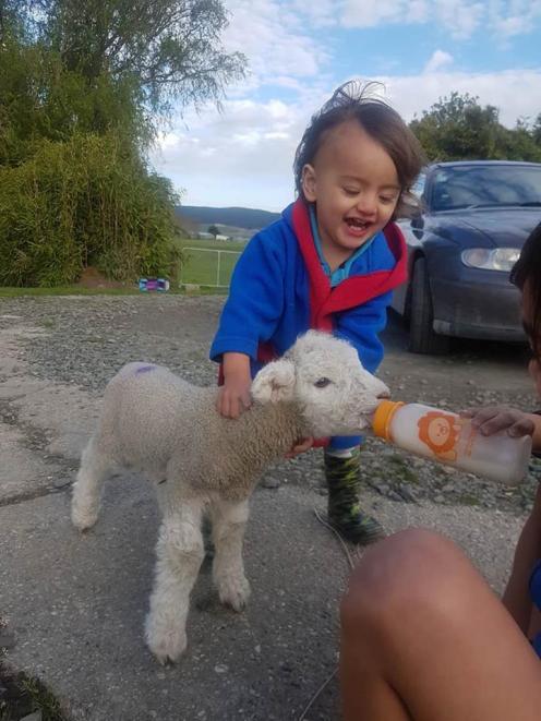 Michael Hyslop(1) feeds Lamb Lamb, Photo: Marc Hyslop