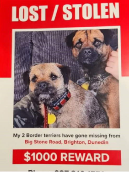 Rowan Newman's family is desperate to find their missing dogs Scruff and Floss. Photo: Supplied
