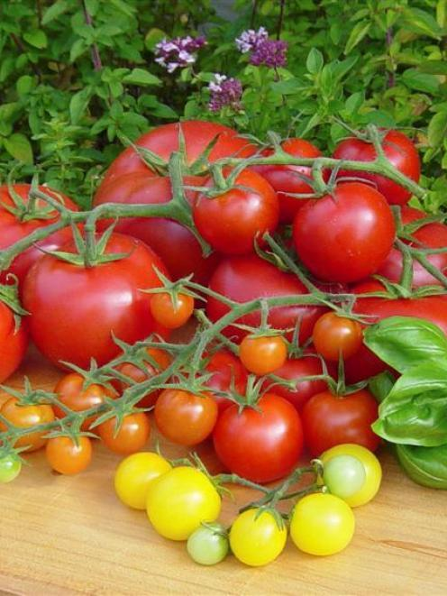Tomatoes rose more than 60% in March. Photo: ODT files