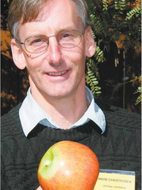 The full Monty: This Monty's Surprise apple, discovered by Wanganui accountant Mark Christensen ...