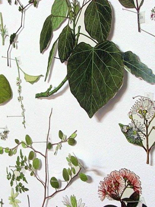 <i>PODOCARPACEAE/Dacrycarpus - PANDANACEAE/Freycinetia (detail),</i> by Gabrielle Amodeo