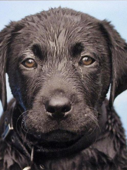 <i>Wet dog</i>, by David Berg