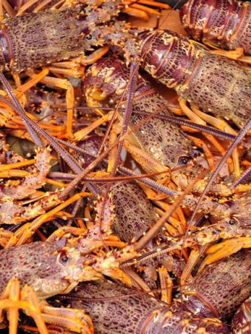''There are few scarier things than a crayfish.'' Photo by Stephen Jaquiery.
