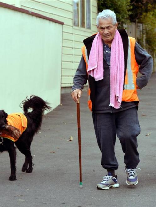 A familiar sight in  Sunnyvale  was  Ngatikahu McGee walking his two brightly-clad dogs Bemo  ...