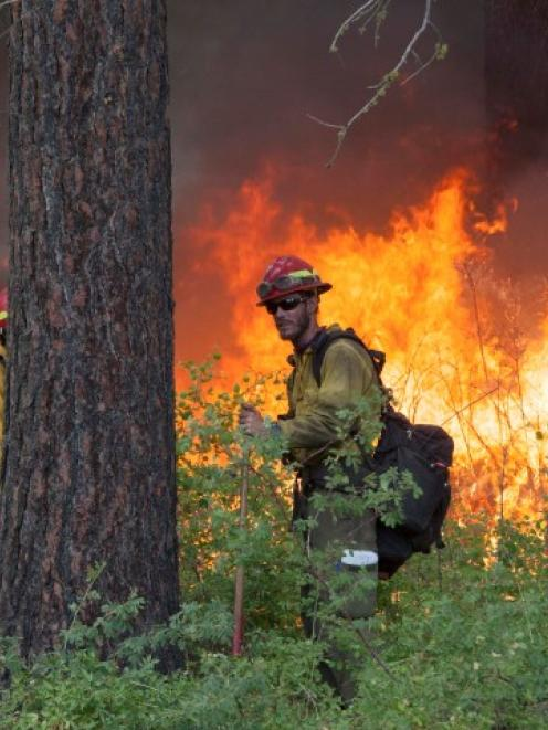 A firefighter keeps watch over a controlled burn while battling the Carlton Complex Fire near...