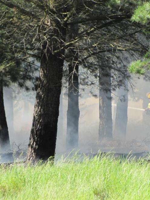 A firefighter tackles one of fires in the Pines reserve north of Alexandra yesterday. Photo by...
