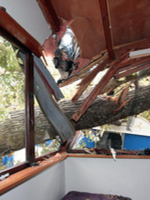 A large tree smashed into a teen's bedroom on Onewa Rd, Birkenhead. Photo / Doug Sherring