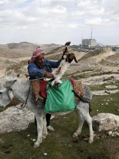 A Palestinian puts a newborn lamb on a donkey in an area near Jerusalem known as E-1, where there...