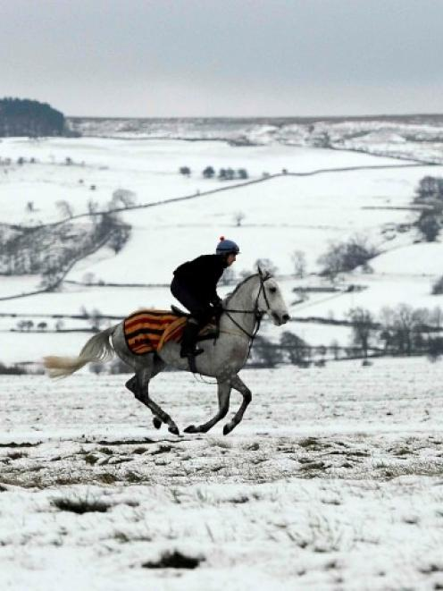 A racehorse is taken out for an early morning ride in Middleham, northern England. REUTERS/Nigel...
