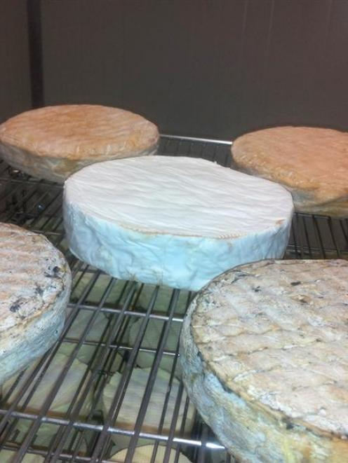 A selection of cheeses made from deer's milk by Over the Moon Dairy. Photos by Timothy Brown.