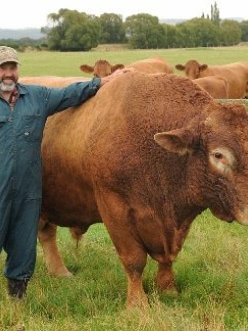 Бизнес план на развод бычков