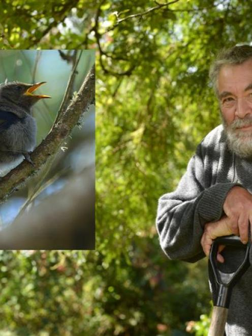 Amateur botanist David Lyttle checks out the changes in his garden since  possum numbers have...