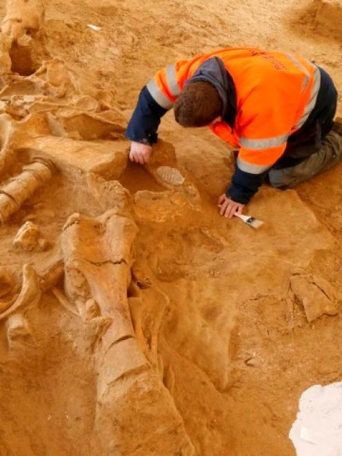 An archaeologist works to finish up the excavation of remains from a preserved woolly mammoth...