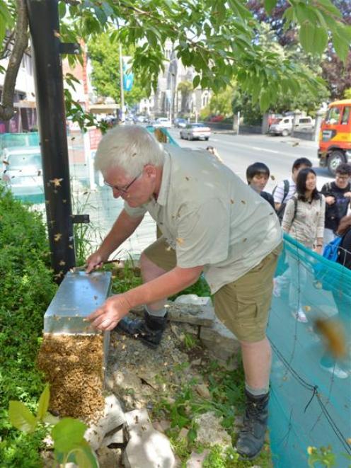 Apiarist John Graham, of Bennie's Honey, coaxes bees into a box after complaints regarding a...