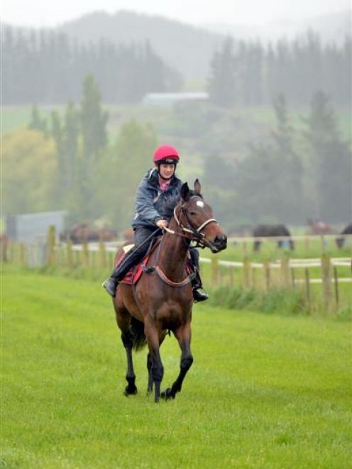 Apprentice jockey Courtney Barnes rides Knightonthetown at White Robe Lodge at north  Taieri...