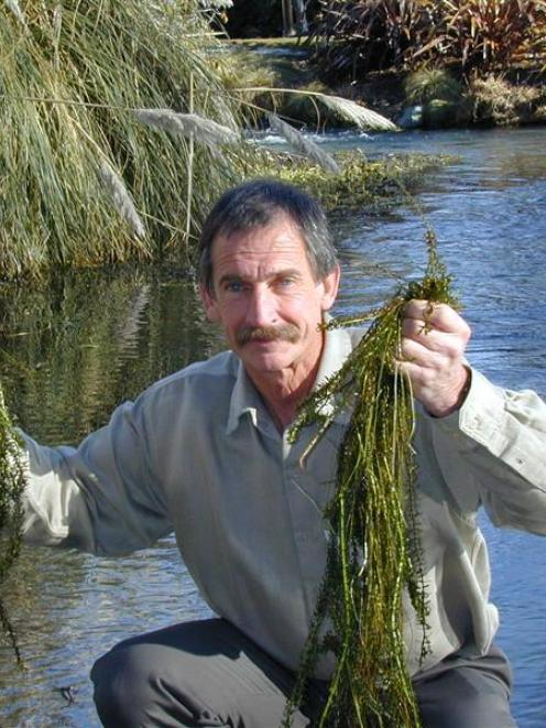 Aquatic plant scientist Dr John Clayton displays  lake weed pulled from Bullock Creek, in Wanaka,...