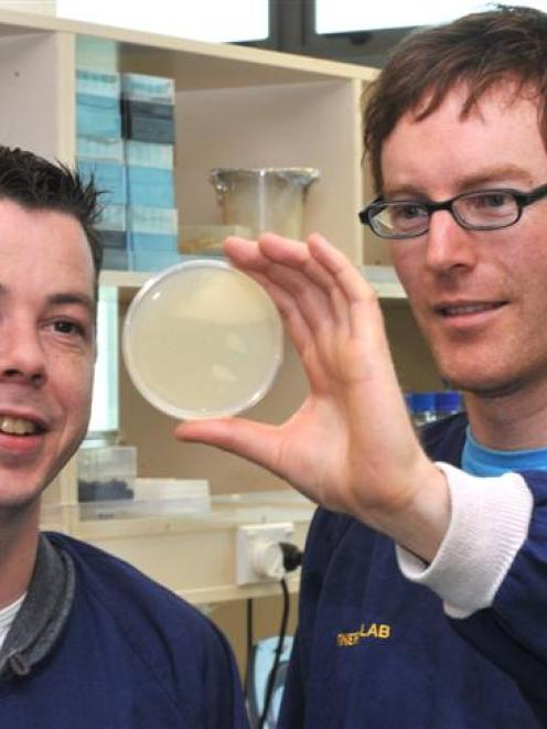Assistant research fellow Raymond Staals (left) and Dr Peter Fineran, of the University of Otago...