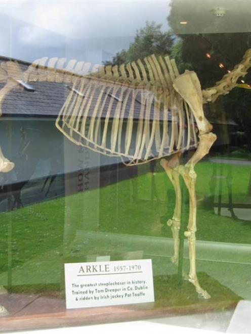 At the entrance to the museum at the Irish National Stud is the mounted skeleton of the great...
